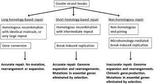 genes and junk in plant mitochondria u2014repair mechanisms and