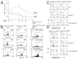 a role for stat5 in cd8 t cell homeostasis the journal of