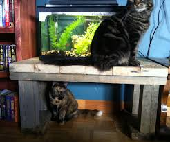 upcycle aquarium stand or coffee table 7 steps with pictures