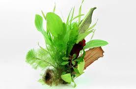 native plant database plant database dennerle