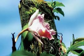 Orchids Care Orchid Care And Transplants Home Guides Sf Gate