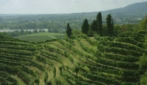 arte cuisine du monde vignes et vignerons du monde une série documentaire à voir sur