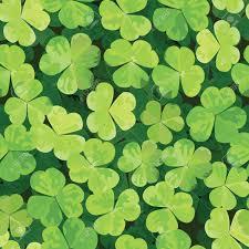 three leaf clover stock photos royalty free three leaf clover