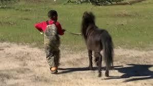 Louisiana travel pony images Boy holds wedding for his pony cnn jpg