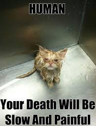 Thinking Cat Meme - cat memes funny and cute kitten memes