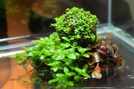 simple indoor water garden wabi kusa garden culture magazine