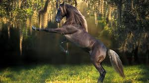 horse wallpapers for computer wallpaper cave