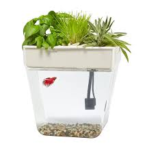 amazon com back to the roots water garden fish tank premium
