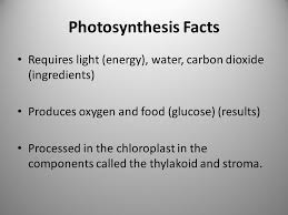 Light Energy Facts General Biology Review Sheet For End Of Instruction Ppt Download