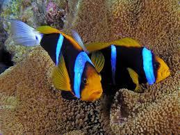 ornamental fish peixes fish fundo do mar