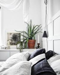 Best Plants For Bedroom The 5 Best Plants For Your Bedroom Muse Sleep