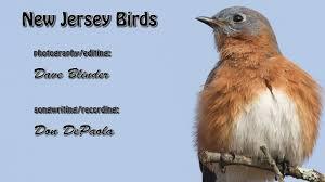 New Jersey birds images New jersey birds jpg