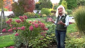 Types Of Botanical Gardens by What Are The Various Types Of Hydrangeas Youtube