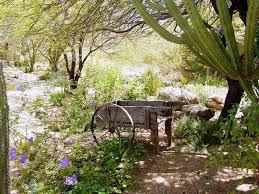 desert landscaping trees u2014 jen u0026 joes design best desert