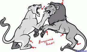 draw fighting lions draw fighting animals step step