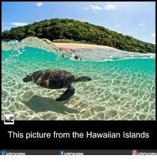 Hawaiian Memes - his picture from the hawaiian islands filitefactsinc facts inc