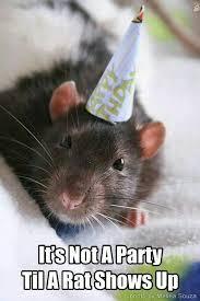 Rat Meme - rats 盪 page 5