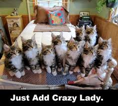 Crazy Lady Meme - funny cat memes best cute kitten meme and pictures