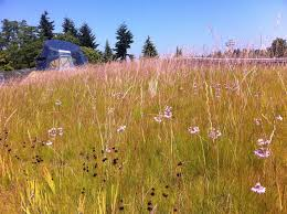 greenroofs com projects vandusen botanical garden visitor centre