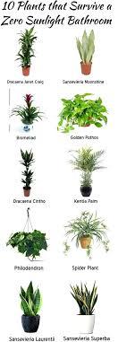 best house plants indoor plants low light low maintenance my web value low light