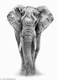 elephant u2026 pinteres u2026