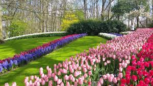 keukenhof park netherlands the most beautiful spring garden in