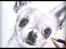 drawing how to draw a realistic dog with pencil speed drawing