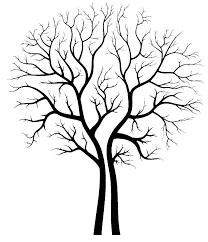 bonsai tree design ideas for house