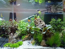 my new 90 litre 1st attempt at an aquascape aquariums