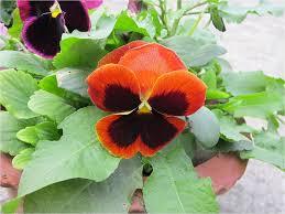 Pictures Of Garden Flowers by Naming Summer Garden Flowers Newton U0027s Apple Org Uk