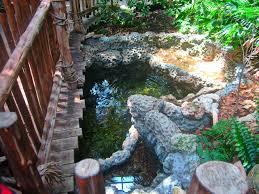 may 2013 manatee springs mixed turtle gar pond zoochat