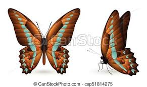 set of colorful butterflies front and side view set of