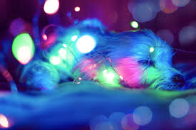 blue green and pink light bokeh free stock photo