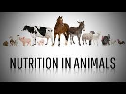 nutrition in animals class 7 science youtube