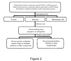 patent us8021662 microorganisms for therapy google patentsuche