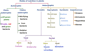 nutrition in plants modes of nutrition in plants types of plants