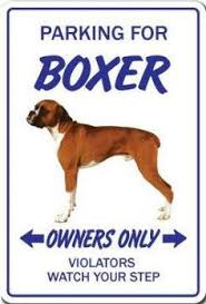 boxer dog jokes article after the boxer of course you u0027re 1 boxer goodies