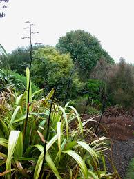 native plants new zealand when architects garden u2014 lifeart u2013 andrea haumer