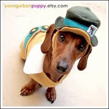 Disney Halloween Costumes Dogs 92 Dog Costumes Images Animals Pet Costumes