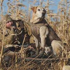 Dog Blinds Marsh Mutt Is Offering A 15 Discount On Select Dog Blinds And Stands