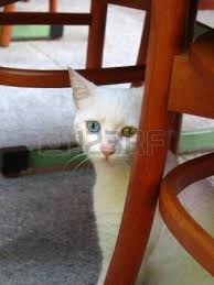Cat Under Chair Cat Sleeping Under Fern In Crete Greece Stock Photo Picture And