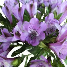 alstroemeria flower alstroemeria flowers