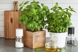 herbe cuisine herbe fraîche de basilic dans la cuisine d huile d olive de pot