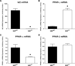 novel role for inhibitor of differentiation 2 in the genesis of