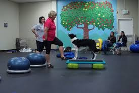australian shepherd rescue california australian shepherd toy aussie rescue dog training agility tustin
