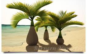 sylvester palm tree prices bottle palm naples