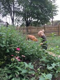 community herbal garden project