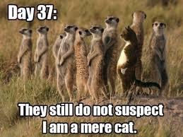 Thursday Funny Memes - chuck s fun page 2 five memes meme like funnies