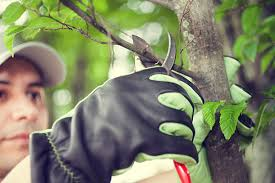 preventive tree pruning inexpensive tree care