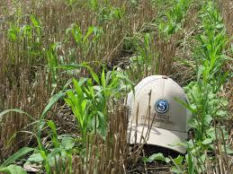 easy cover crop recipes video blog seneca conservation district